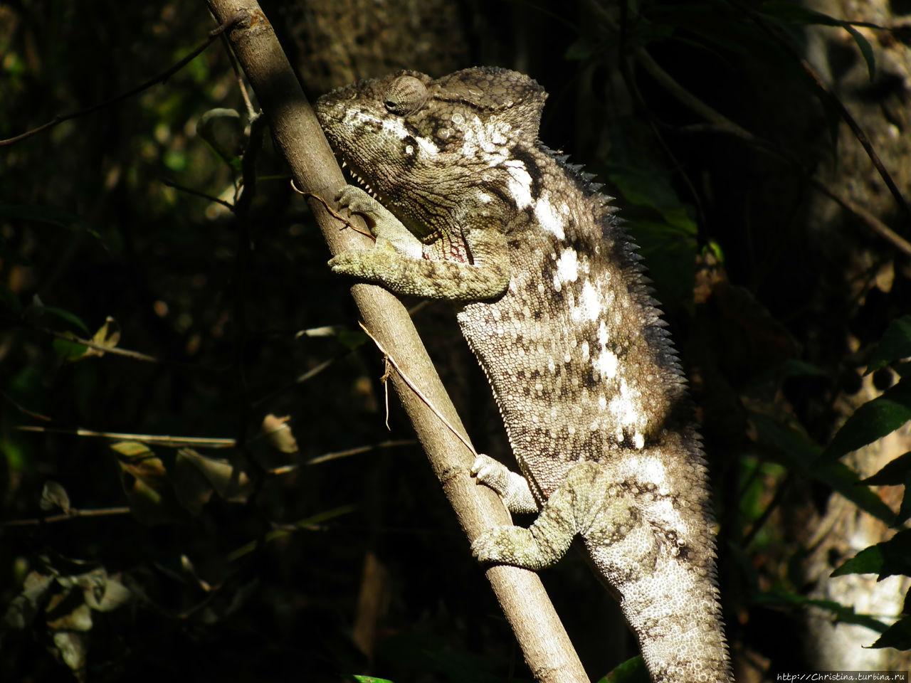 А с лягушками — облом Провинция Фианаранцуа, Мадагаскар