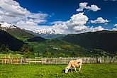 Горные пастбища.. кайфуют коровки:)