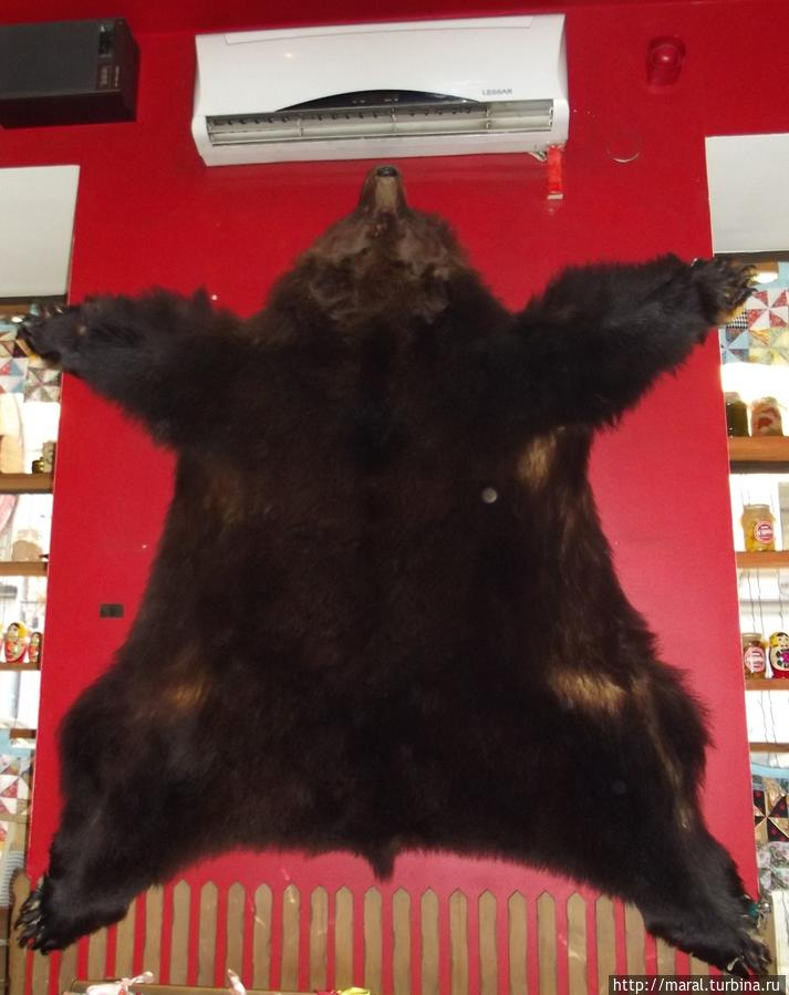 Напрасно мы ждали балалаечника с медведем