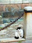 Вот даже кот нам изволил позировать:)