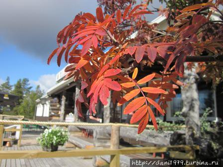 Осенью в Лапландии деревья цветные
