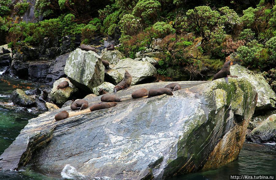 Milford Sound Квинстаун, Новая Зеландия