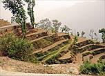 Террасы – это самое настоящее произведение земледельческого искусства, отличающиеся совершенством линий и невероятных изгибов