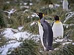 пингвины к ленину приходят  и из котомок достают  тут наши бабы вождь собрали  снежков домашненьких тебе