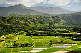 Долина Ханалеи. На исторических полях выращивают местный съедобный корешок, в наши дни больше для красоты, чем для пропитания.