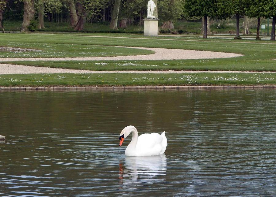 Лебединая сказка в парке Шантийи Шантийи, Франция