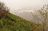 Западный Иран, низины гор Загрос весной покрываются цветным ковром, а на верхушках пиков лежит снег