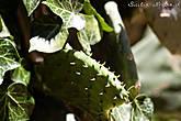 Очень милые кактусы повсюду