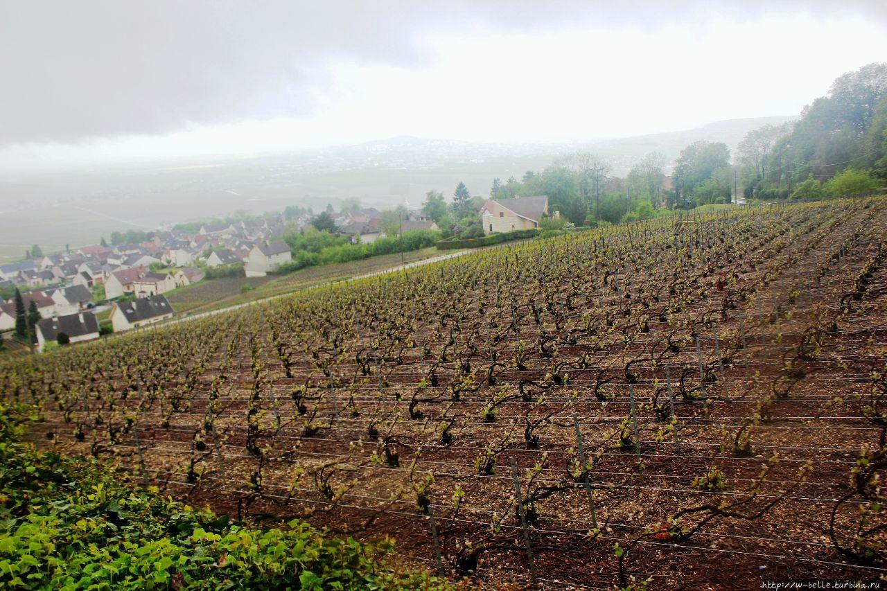 Дегустационный повод: виноградники Отвийе /Hautvillers Отвийе, Франция