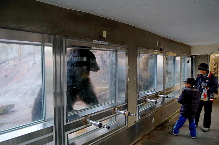 Кормление медведей