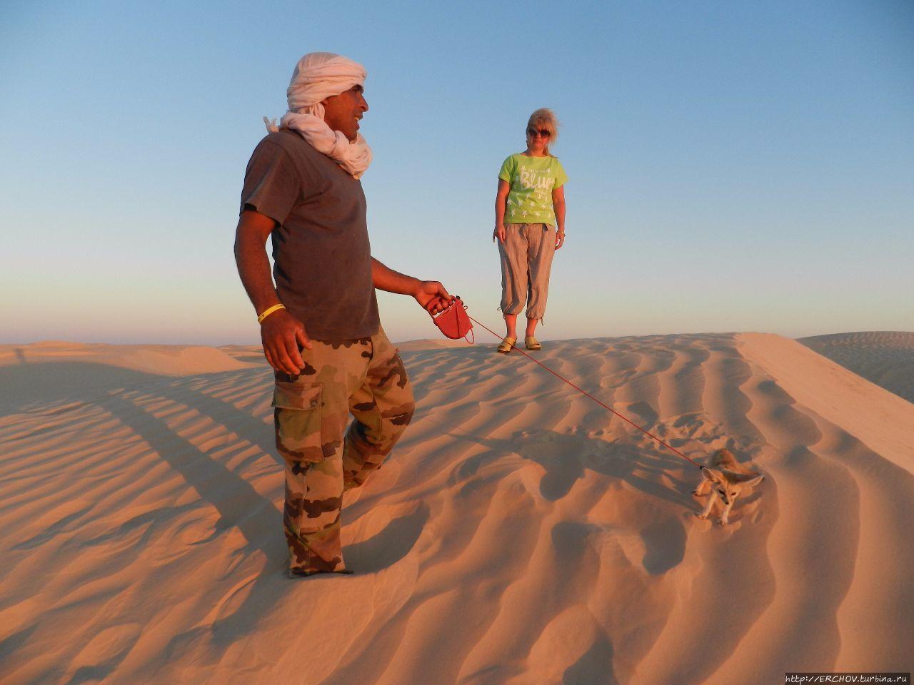 Экскурсия в Сахару. Ч — 4. Катание на верблюдах