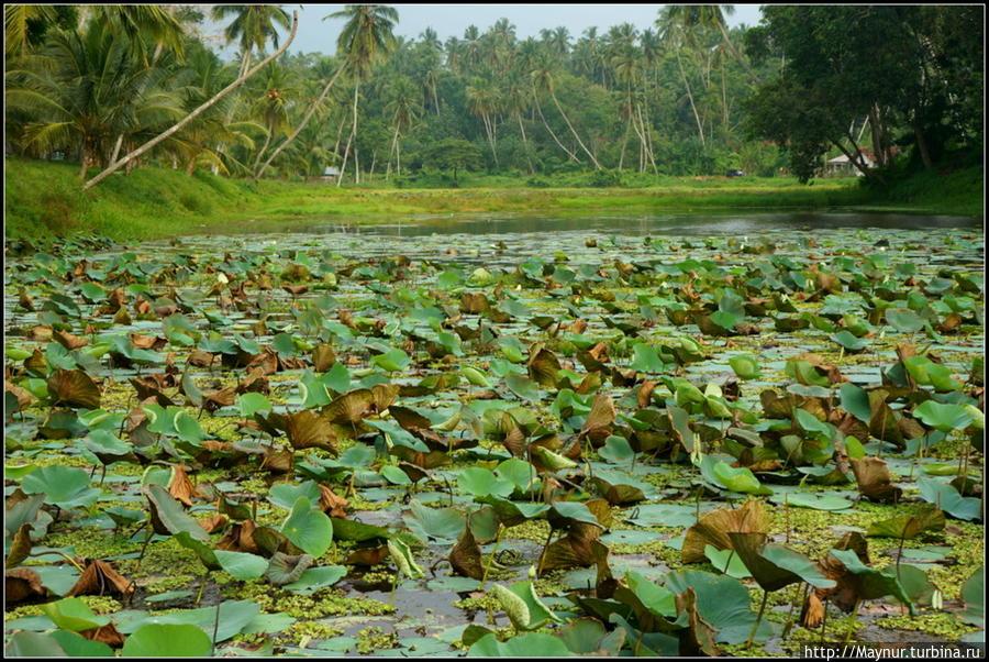 Озеро   у   подножия  горы. Тангалла, Шри-Ланка