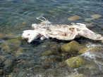 Погибший дельфин
