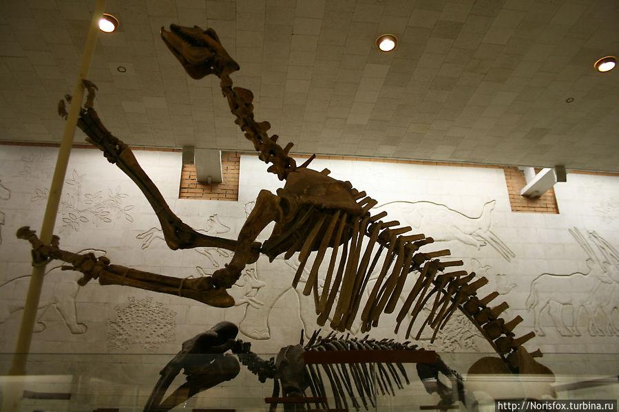 Скелет Борисякии. Верхн. олигоцен. Казахстан