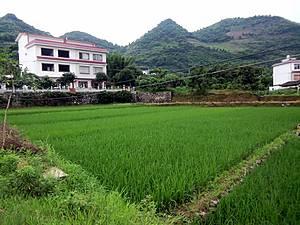 В деревеньках, мимо которых проходила наша дорога , бросается в глаза то, что рисовые ячейки вплотную подступают к стенам домов —  настолько ценен каждый клочок земли.