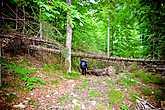 После реки шли по старой лесовозной дороге, когда-то в советские времена здесь хорошо было налажено лесозаготовительное хозяйство, но с распадом союза лес перестали валить, а нам это только на руку.