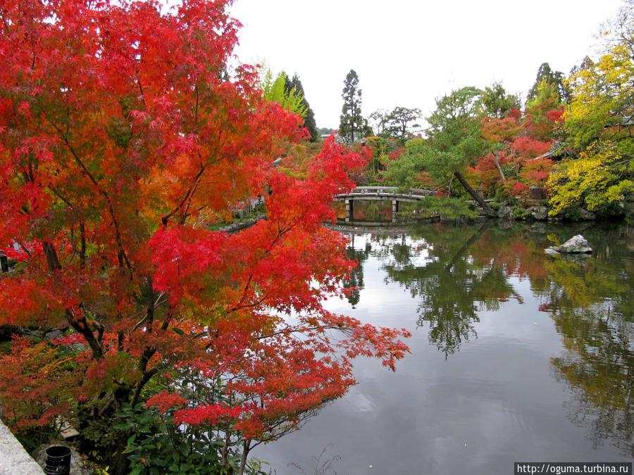 Садик с прудом в храме Эйкандо Япония