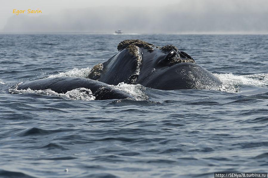 Аргентинские приключения — в гостях у китов и пингвинов Пуэрто-Мадрин, Аргентина