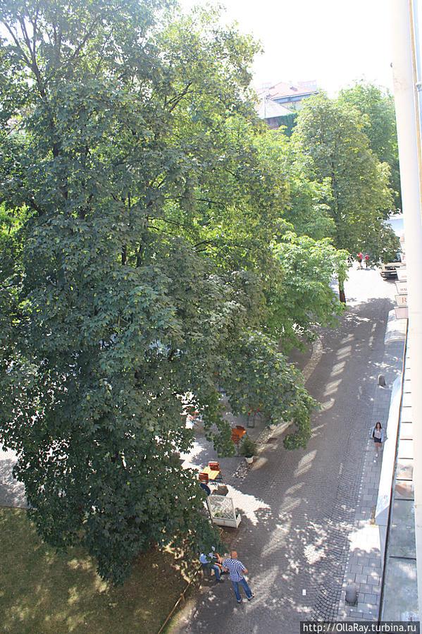 Вид на улицу и общественную парковку