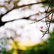 Вроде как и весна начинается