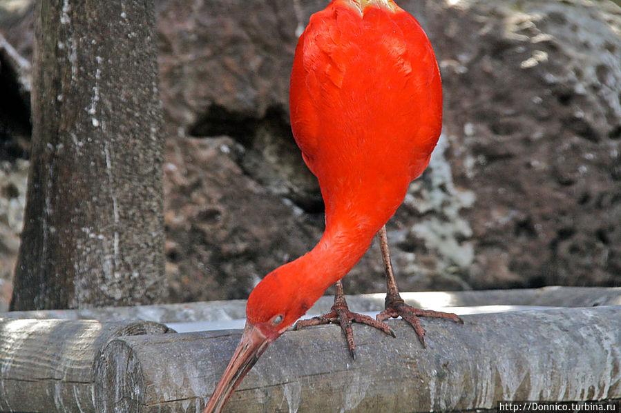 если абстрагироваться от ненужных деталей, то останется просто красивая красная форма, текущая подобно капле, или мазку красной краски...
