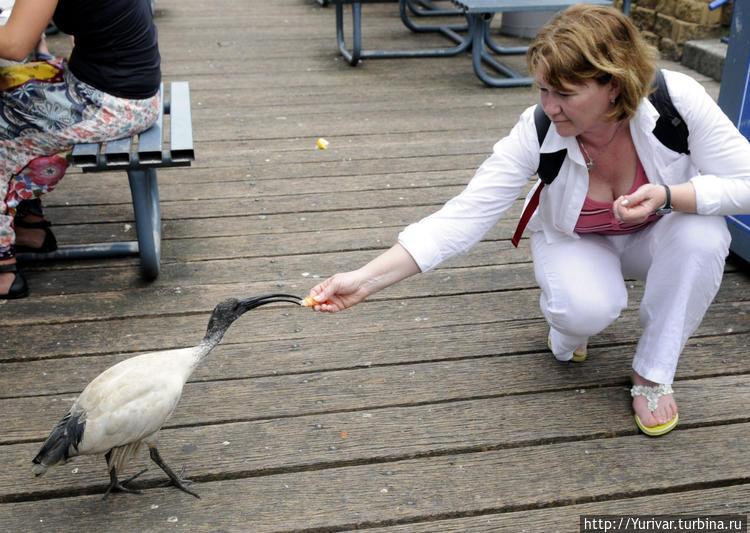 Многие птицы не боятся че