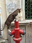 Кот-пожарник)