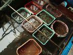 Бухта Халонг. Плавучий рыбный рынок