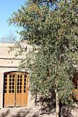 В Саду Мужского Монастыря Святой Екатерины. Вот это растение целиком.