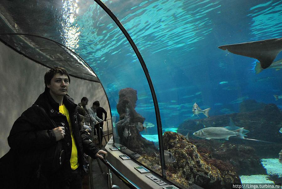 Такое ощущение, что многие рыбы нам откровенно позировали...