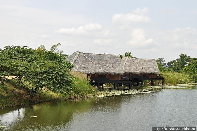 Над проектом отеля работали не только архитекторы, но экологи и натуралисты.