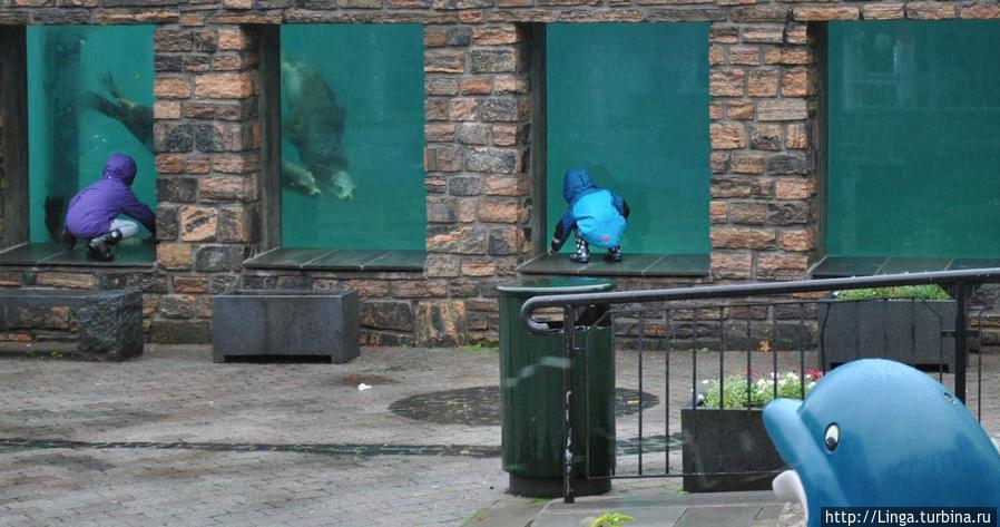 Забавно: дети и взрослые высматривают морских львов в одних окнах, а они нас — в других...
