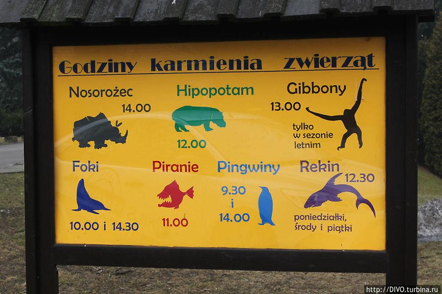 В зоопарке можно понаблюдать за кормлением зверей, представлено расписание