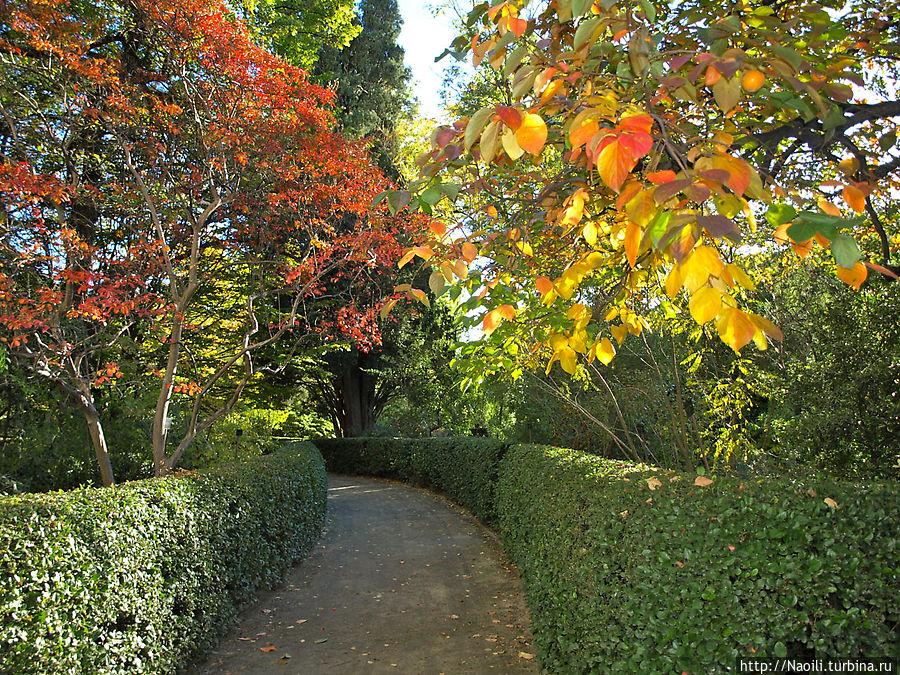 Заходящее осеннее солнце подсвечивает разноцветную листву