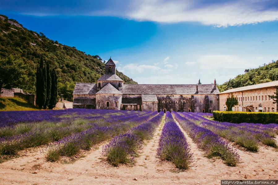 Влюбленные в Прованс. Лавандовые поля Прованс-Альпы-Лазурный берег, Франция
