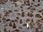 пингвин отец пингвину сыну час полтора читал мораль я б рассказал вам в чём там дело но в по пингвиньи не силён