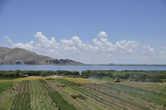 Вокруг всего озера Титикака выращиваю картошку — главный продукт региона.