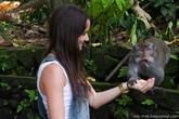 Также обезьяны не прочь поживиться принесенными туристами лакомствами.
