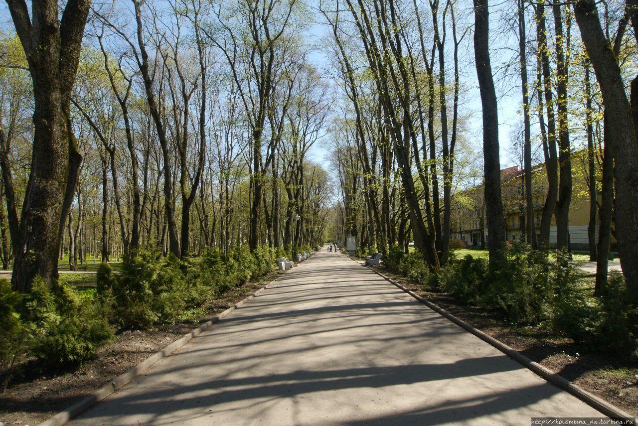 Красота весенних аллей Старая Русса, Россия