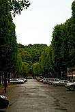 За собором аллея продолжается и становится почти лесной:))