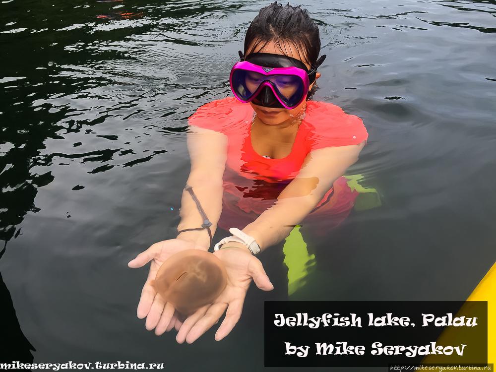 Озеро медуз в Палау Палау