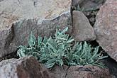 Растительности в горах крайне мало,но всё-таки она есть.