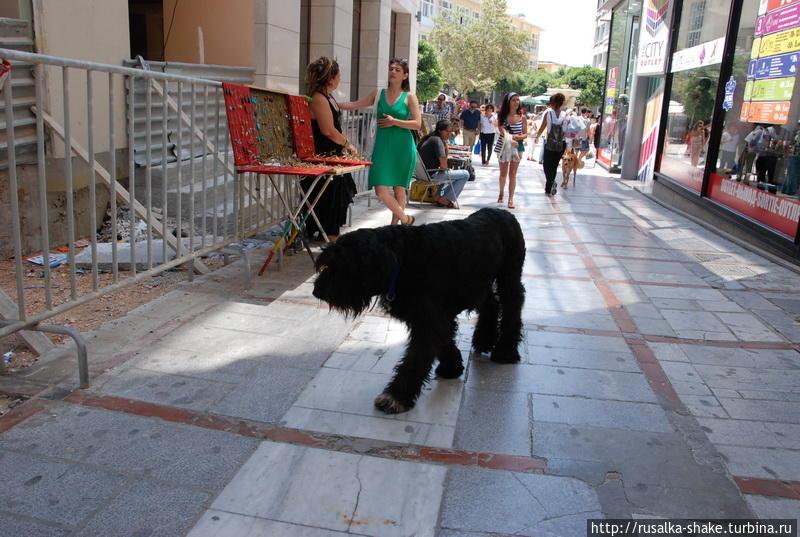 Человек собаке друг! Херсониссос, Греция