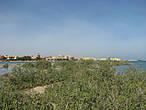 Мангровый остров