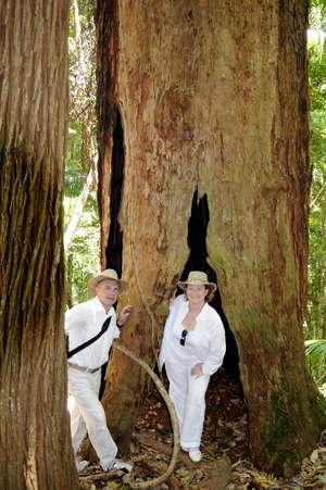 Каждое дерево в джунглях полно тайн