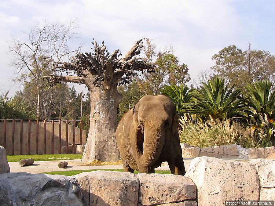 Слон небольшого размера