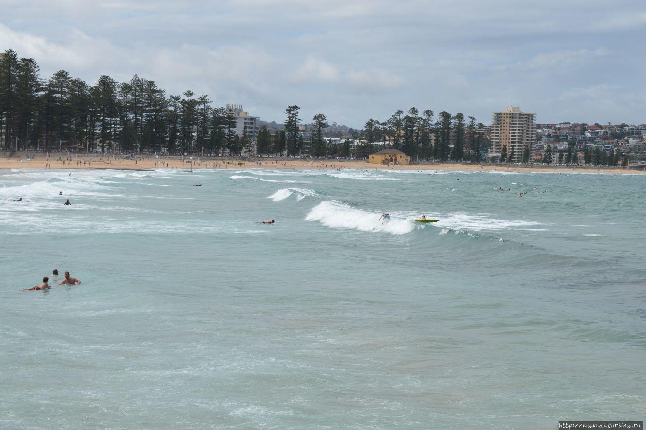 Сидней. Пляж. В поисках тасманского тигра