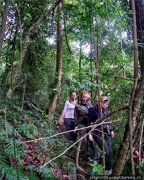 Пробираться через угандийский лес оказалось очень не просто