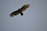Орел в небе над Эк-Балам.
