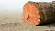 Красное дерево, мечта любого пллотника, приплывшее из Африки и безжалостно распиленное на части местными дворникам